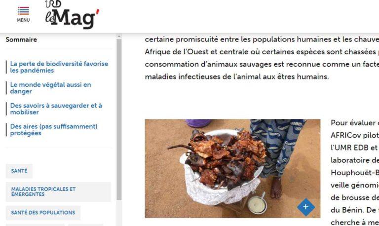 IRD le Mag'